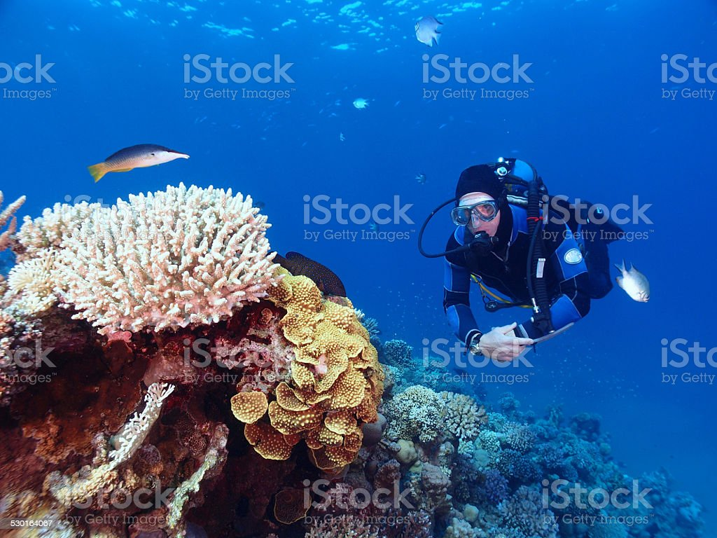Scuba diver with corals and fish stock photo