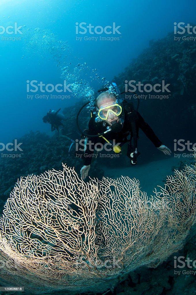 scuba diver with gorgonian sea fan royalty-free stock photo