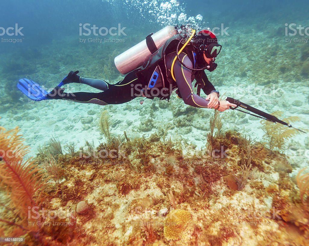 Scuba Diver with Spear Gun stock photo