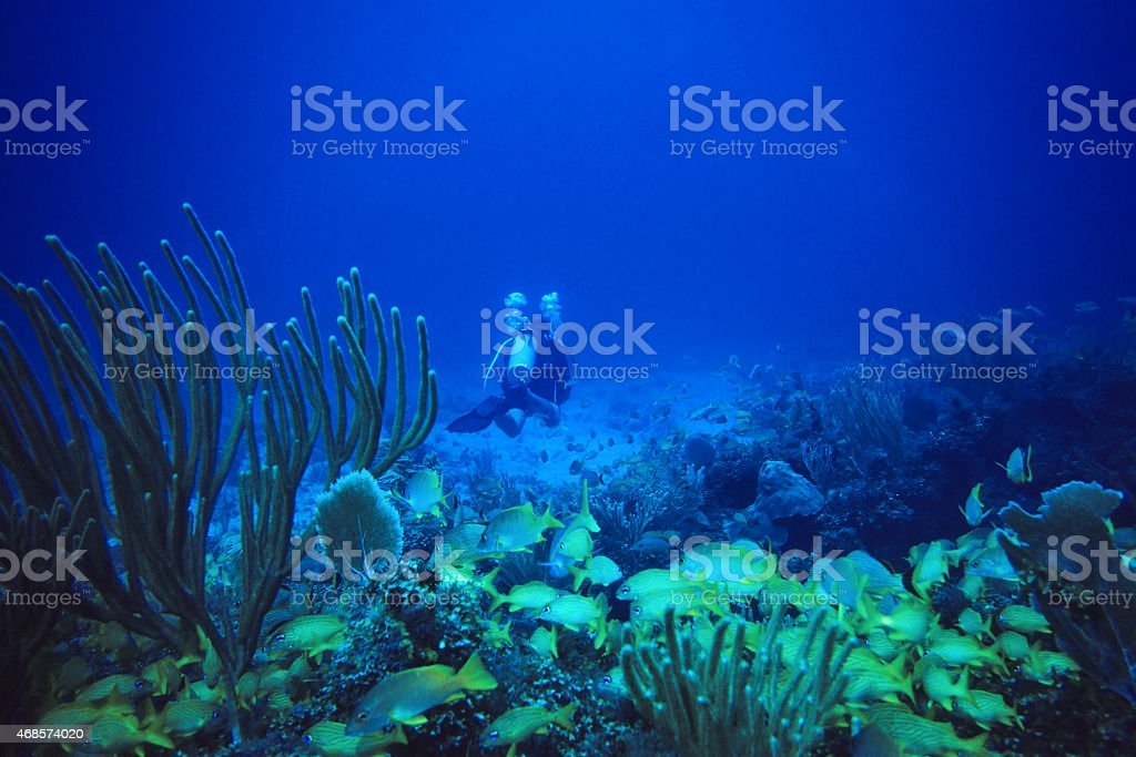 Scuba Diver with Swarm of Snappers stock photo