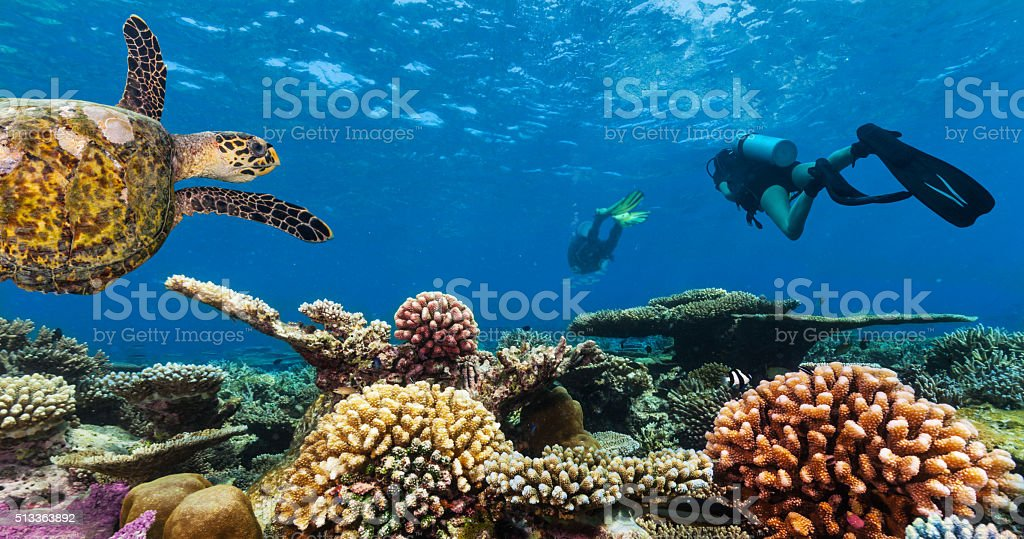 Scuba divers explore a coral reef stock photo
