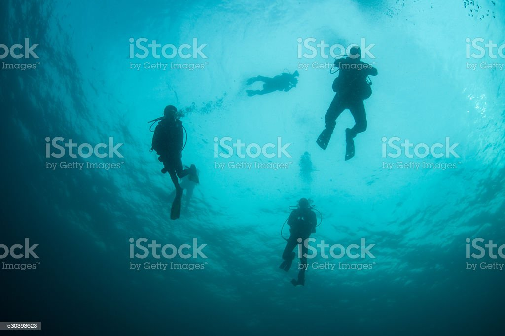 Scuba Divers in Midwater stock photo