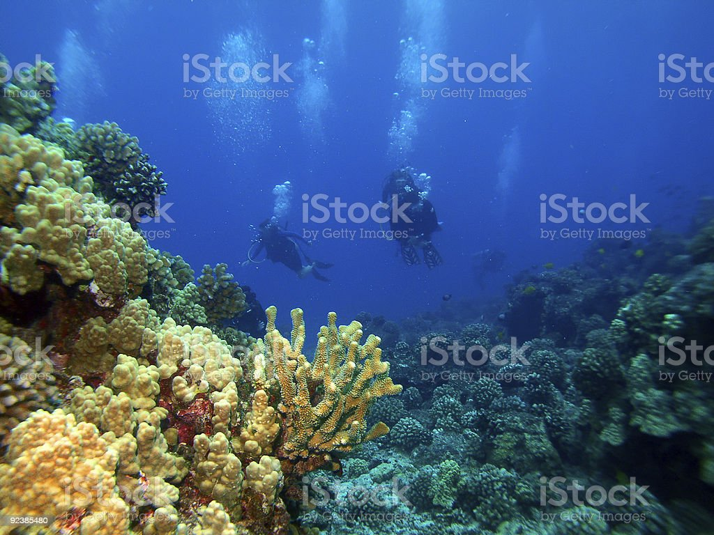 Scuba Divers returng from a dive stock photo