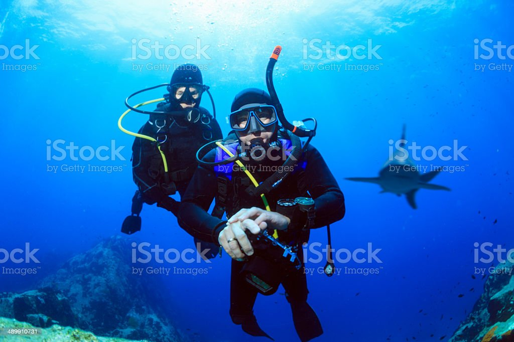 Scuba divers - Shark reef stock photo