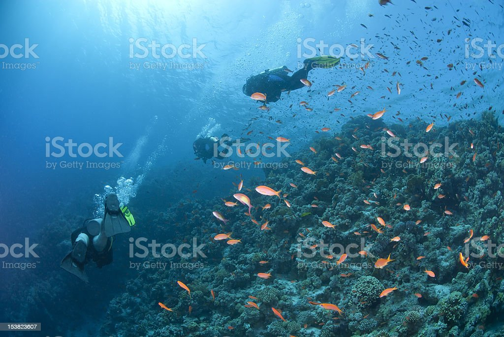 Scuba divers silhouettes over a tropical coral reef with Anthias stock photo