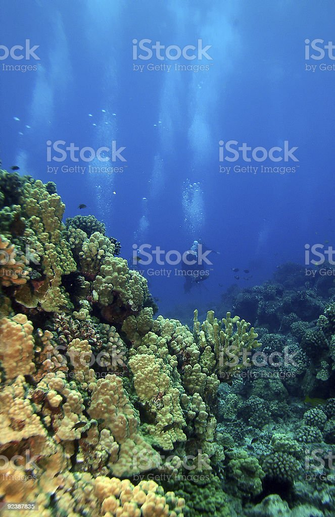 Scuba Divers swimming towards the reef stock photo