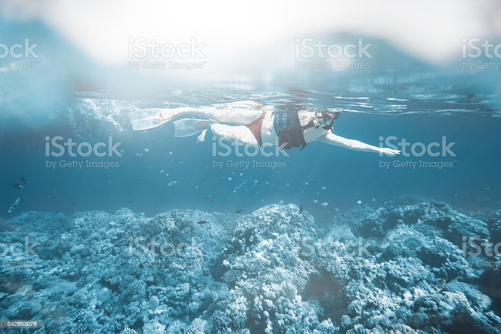 scuba diving and exploring the sea life stock photo