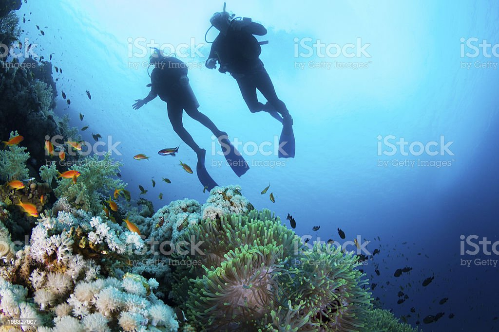 Scuba Diving at Coral Reef stock photo