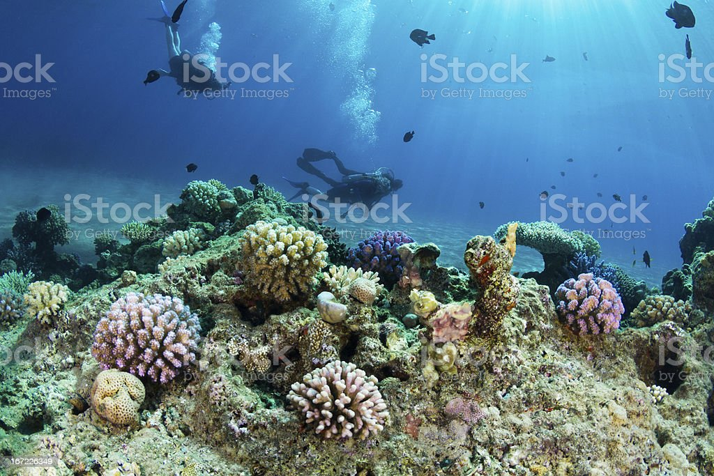 Scuba Diving at Coral Reef royalty-free stock photo