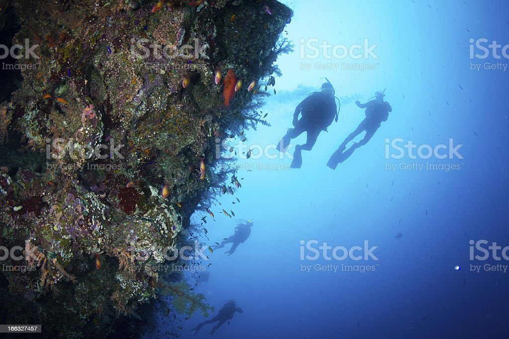 Scuba Diving at Vertical Coral Wall royalty-free stock photo