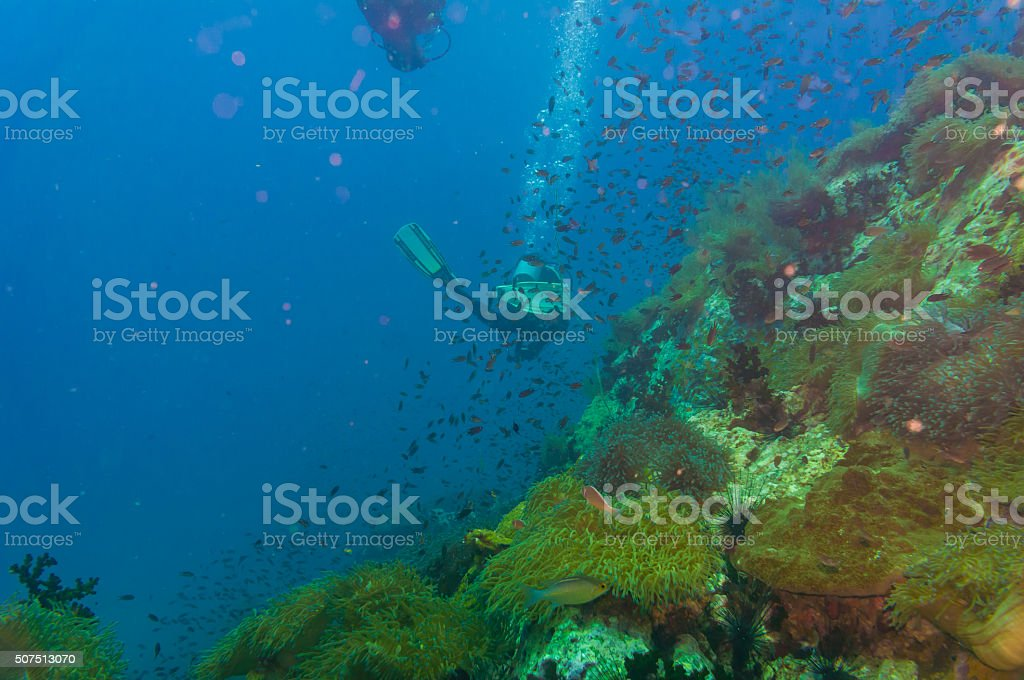 Scuba diving on coral reef in sea stock photo