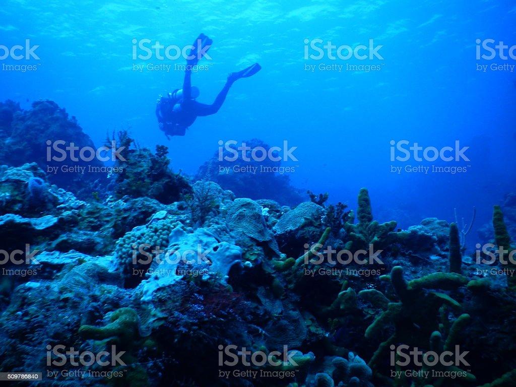Scuba - diving stock photo