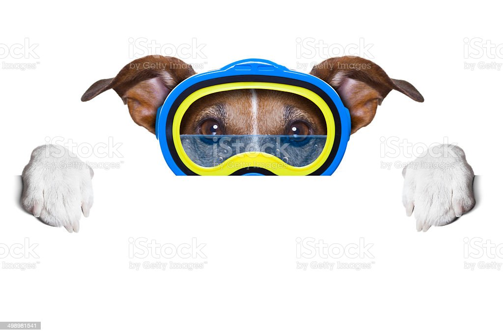 scuba dog stock photo