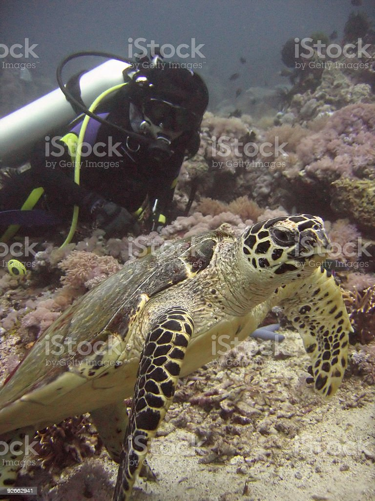 scuba girl turtle dive philippines royalty-free stock photo