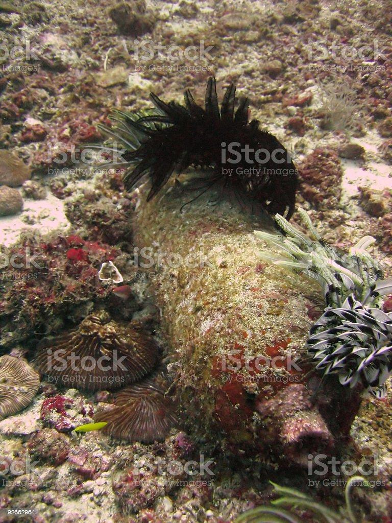 scuba tank royalty-free stock photo