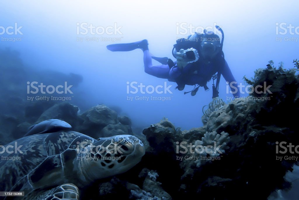 Scubadiver photographing turtle stock photo
