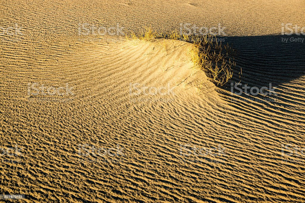 Sculpted Sands abd Desert Brush stock photo