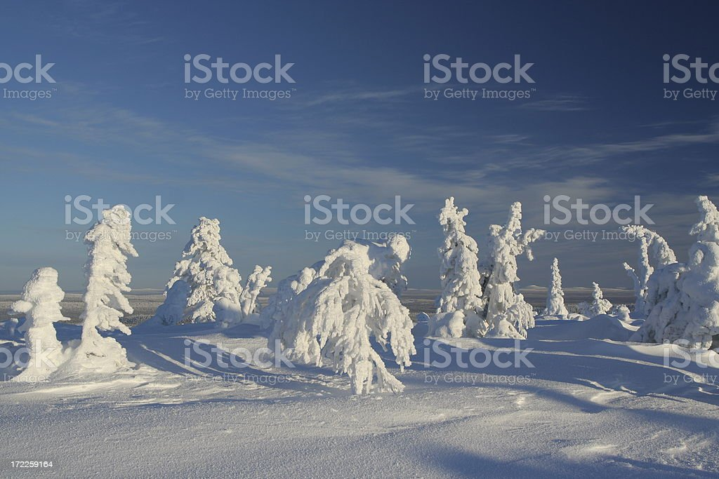 Sculptured frozen trees royalty-free stock photo
