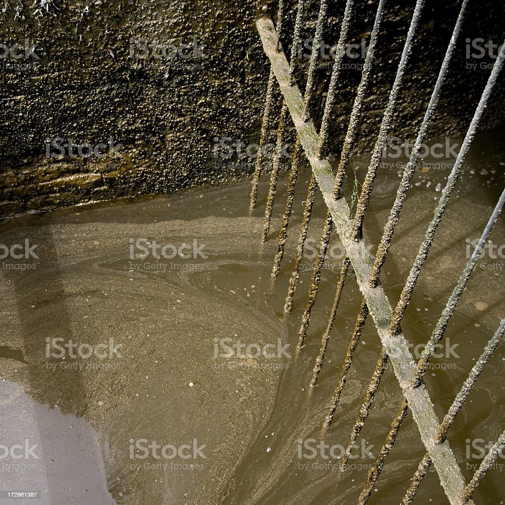 Scummy water royalty-free stock photo