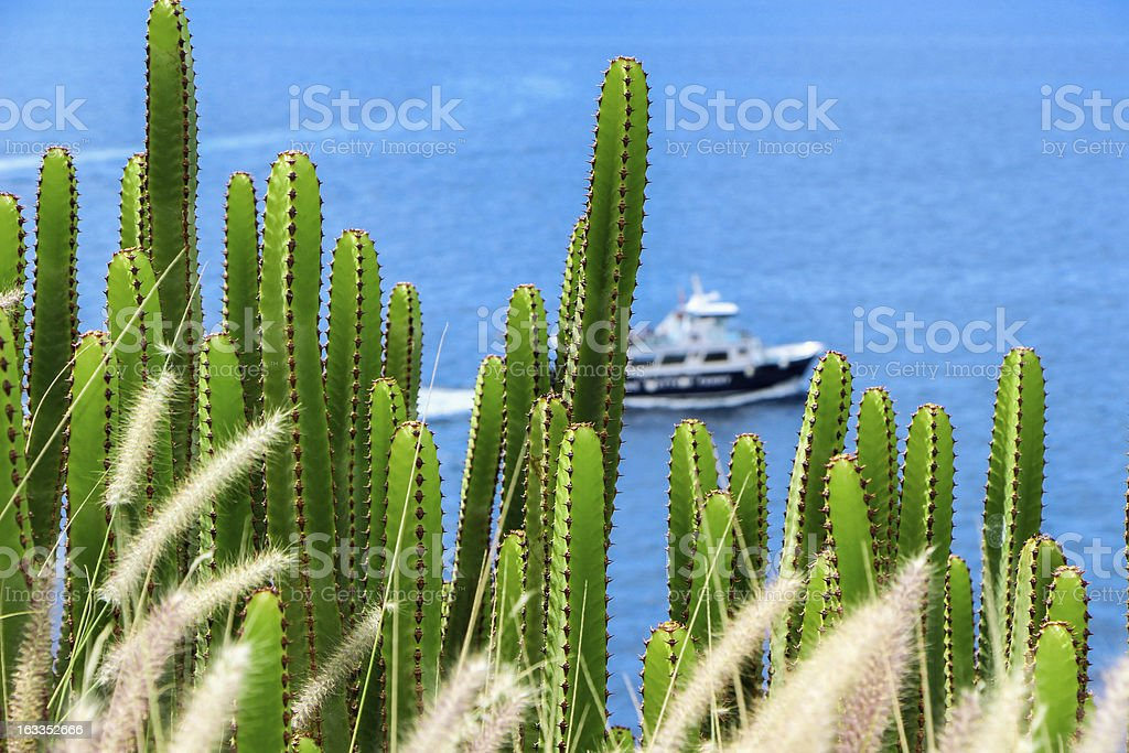 Sea and Cactus : Canary Islands royalty-free stock photo