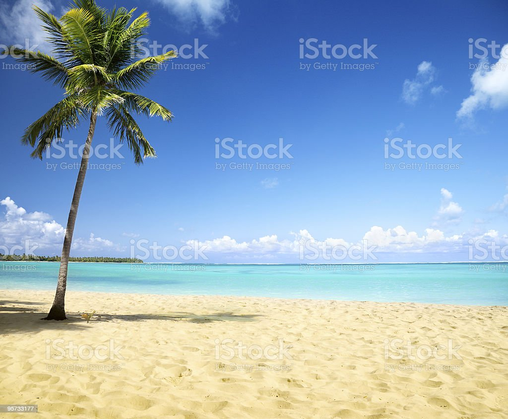 sea and coconut palm royalty-free stock photo