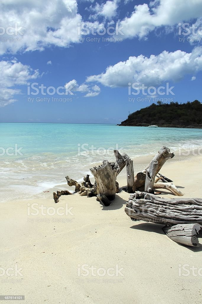 Sea and driftwood stock photo