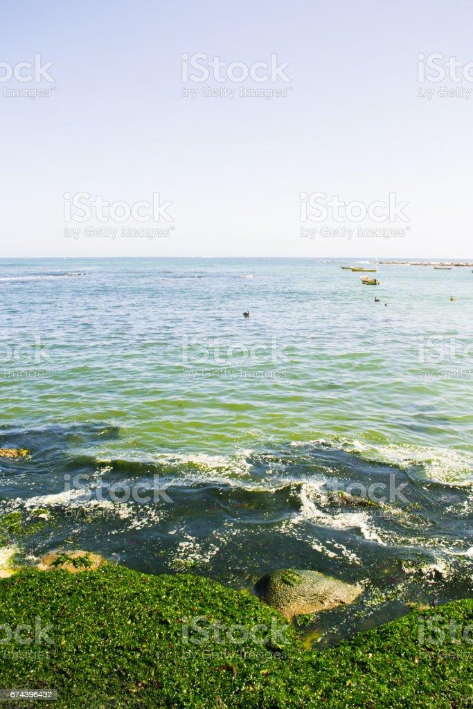 Sea and seaweed in Algarrobo Chile stock photo