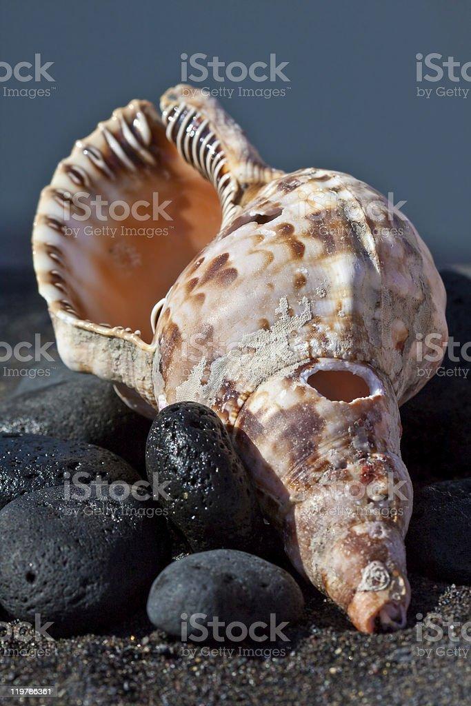 Mar e Conchas foto de stock royalty-free