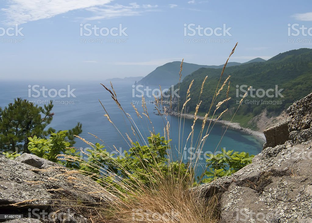 Sea and Taiga 4 stock photo