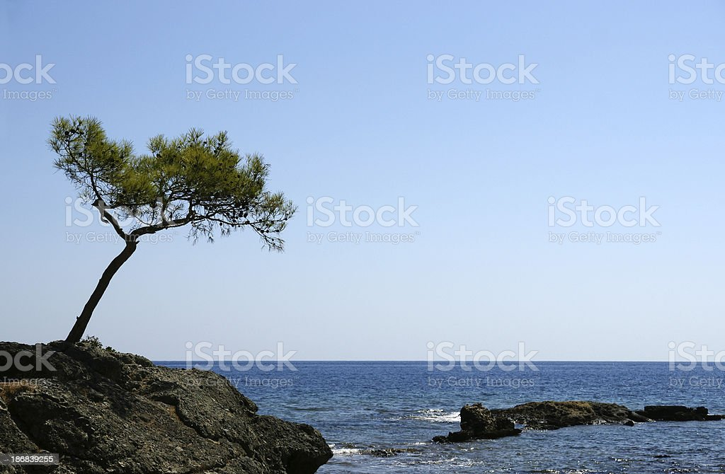 sea and tree in Antalya royalty-free stock photo