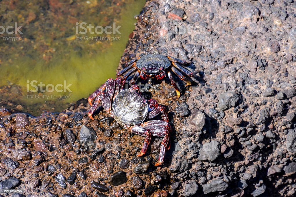 Sea animal red crab stock photo