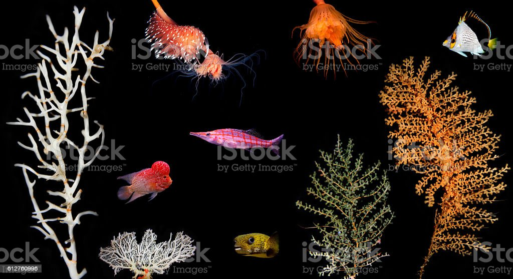 Sea animals various water plants collection stock photo