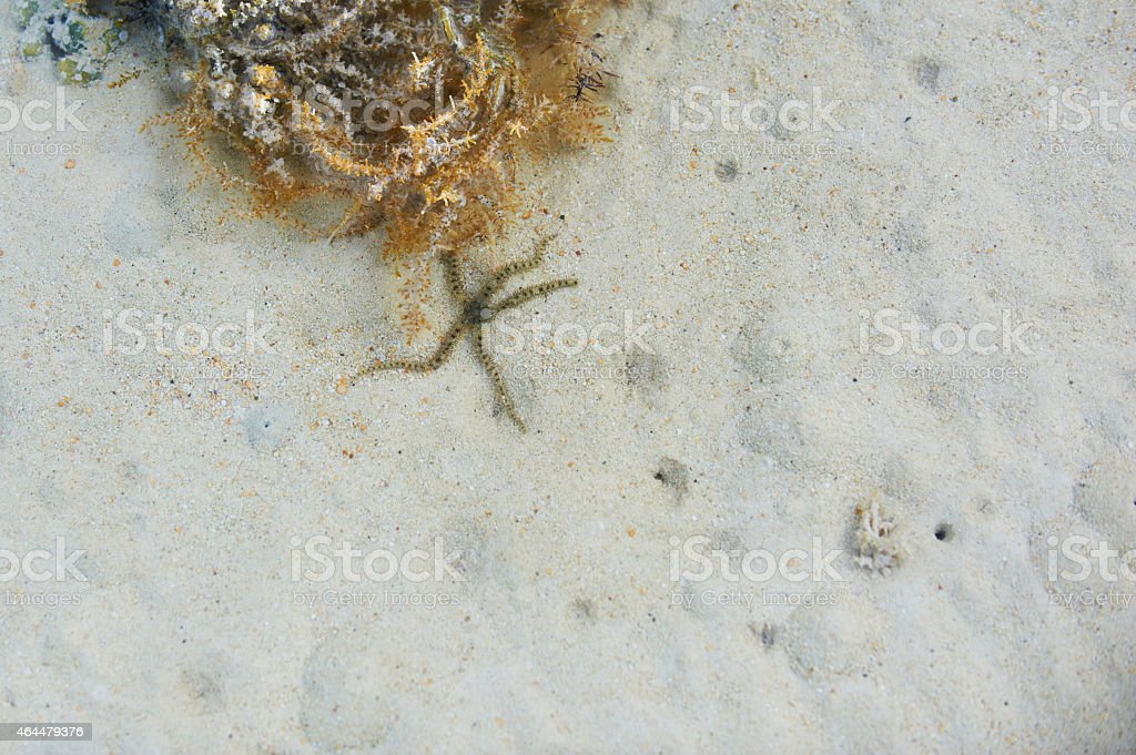 sea background stock photo
