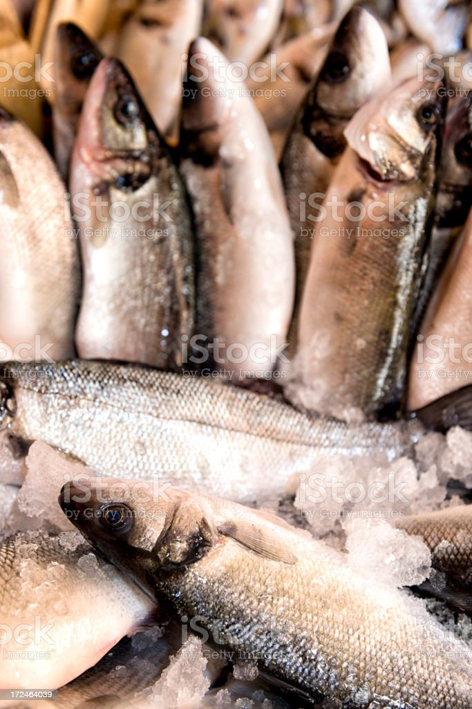Sea bass at fish market royalty-free stock photo