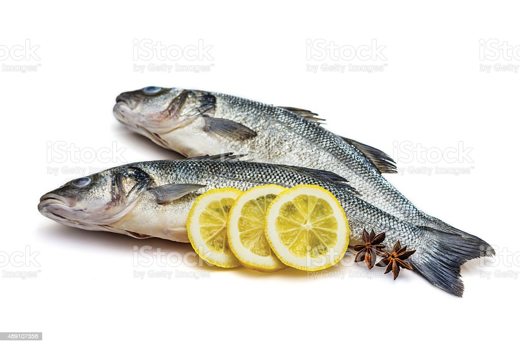 Sea bass fish on withe background stock photo