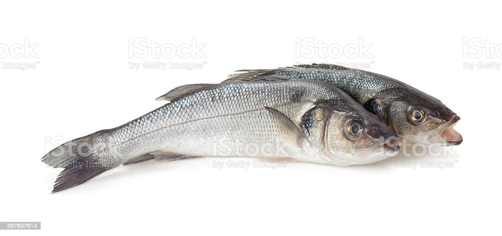 Sea bass fish stock photo