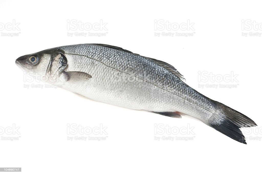 sea bass isolated royalty-free stock photo