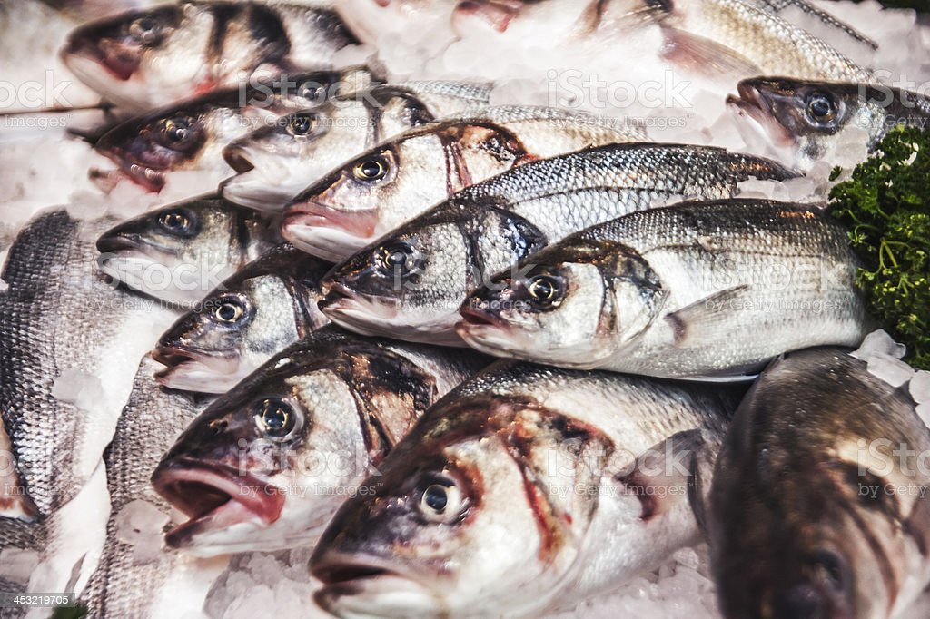 Sea Bass On Ice royalty-free stock photo