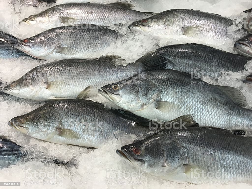 sea bass on ice stall ready for sell stock photo
