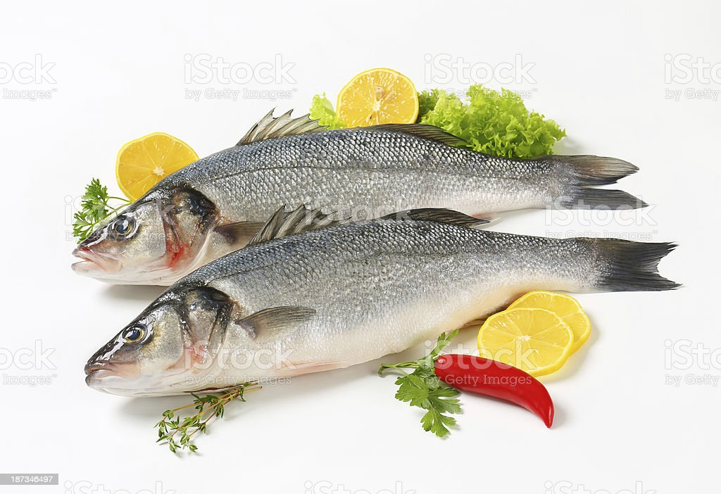 sea basses royalty-free stock photo