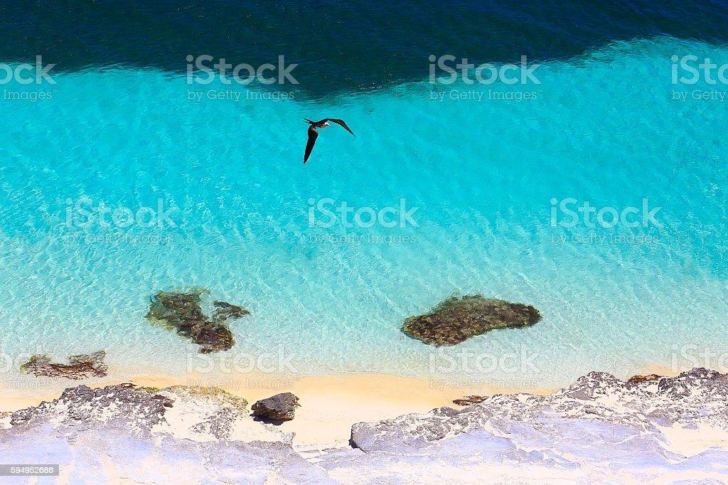 Sea bird flying over Sunny Sandy caribbean turquoise translucent beach stock photo