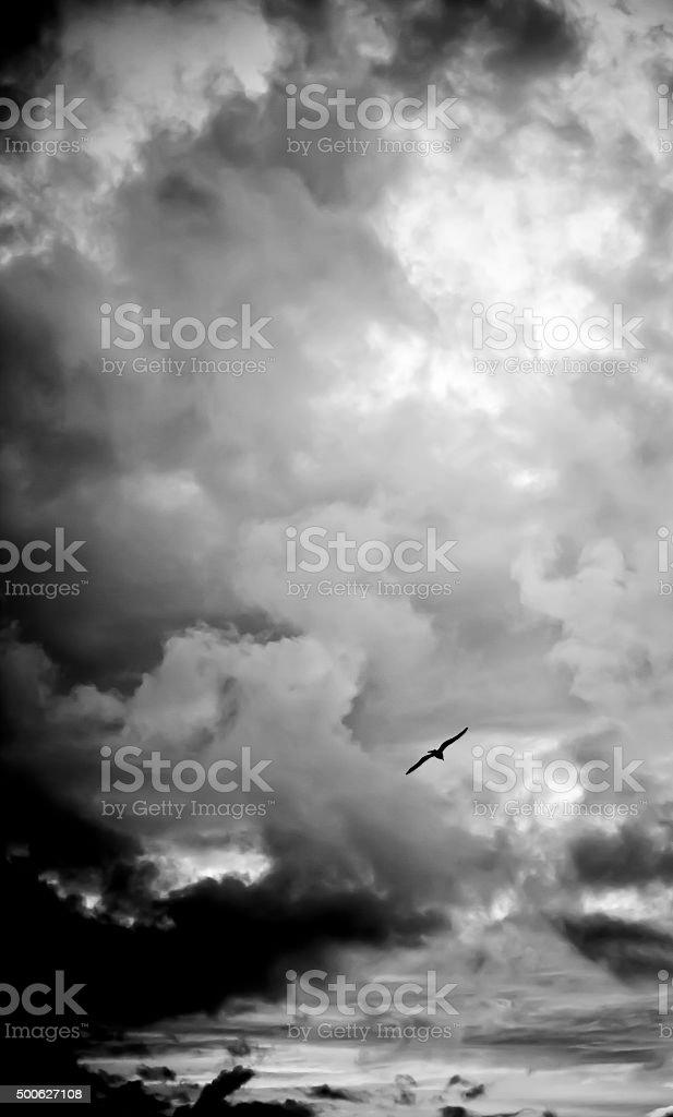 Sea bird in the storm stock photo