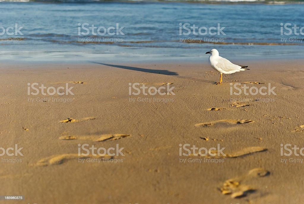Sea bird on a foreshore stock photo