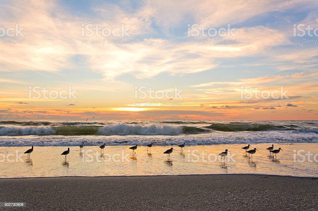 Sea Bird on the shoreline at Sunset, Tampa, Florida. stock photo