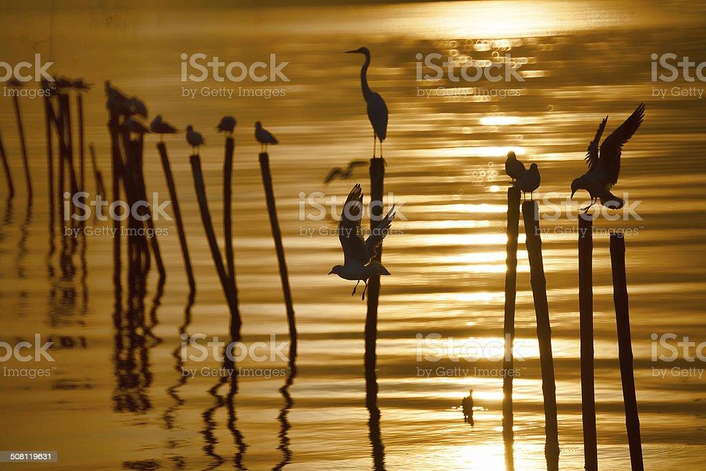 Sea Bird stock photo