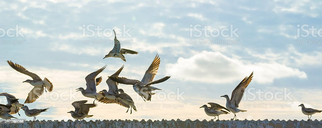Sea birds flying freely royalty-free stock photo