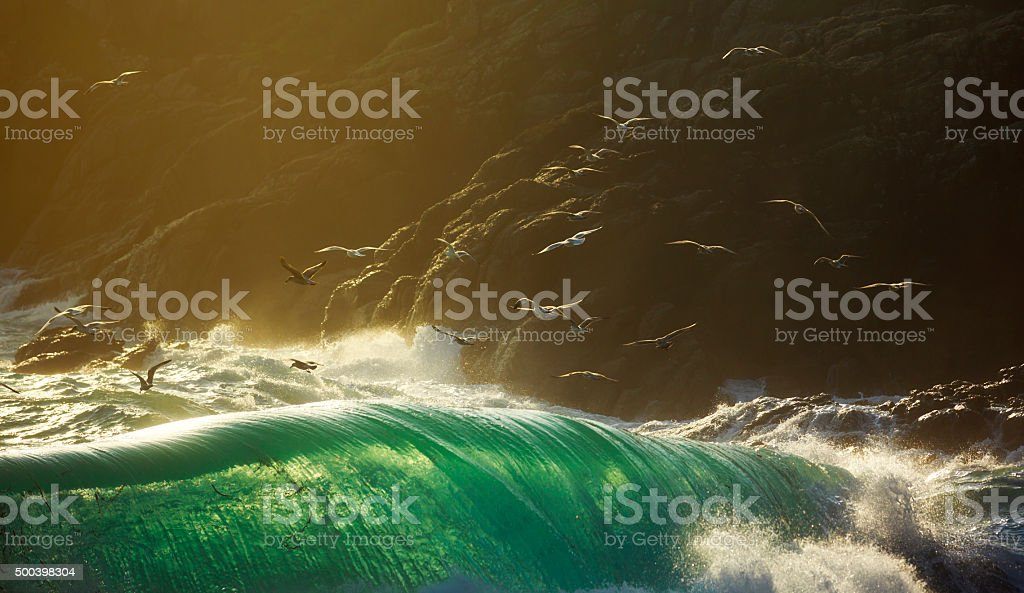 Sea birds flying over huge breaking storm waves stock photo
