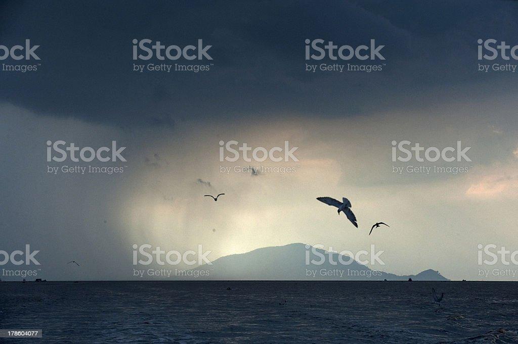 Sea birds in rain royalty-free stock photo