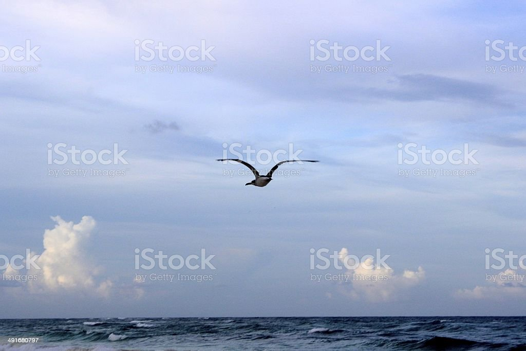 Sea birds over the sea in Tulum royalty-free stock photo