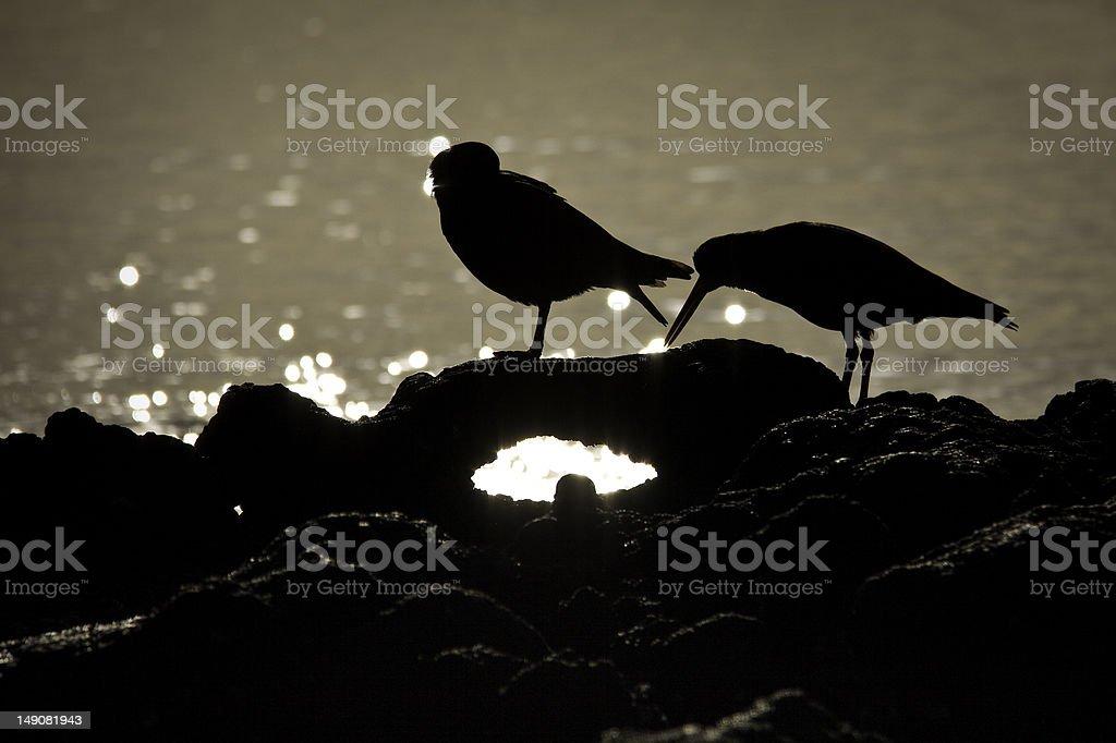 Sea Birds Silhouetted stock photo